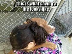 This is what saving a life looks like! This is a photo of a pup being sprung from a high-kill shelter moments before being scheduled to be euthanized. If anyone ever wonders why animal welfare people fight so hard to be a voice for the vo Westies, Beagles, Rescue Dogs, Animal Rescue, Animal Adoption, Animal Shelter, Pet Adoption, I Love Dogs, Puppy Love