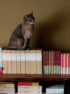 Book Shelf Cat