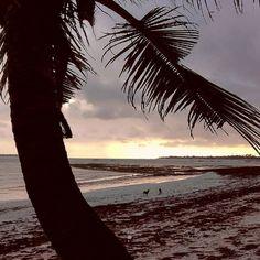 #renebauerphotography #travel #africa #tanzania #africaoverland #overlandafrica #landy #landrover #landroverdefender #camping #nature #landscape  #morning #morninglight #sunrise #goodmorning #daressalam #friends #withfriends #beach #palmtree #dogs #playing Dramatic eary morning light. by renephotoglobo #renebauerphotography #travel #africa #tanzania #africaoverland #overlandafrica #landy #landrover #landroverdefender #camping #nature #landscape  #morning #morninglight #sunrise #goodmorning…