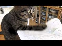 Cat Obsessively Taps At Anything Made Out of Paper || Our cat does the exact same thing. We just don't video it and show off to the world :P