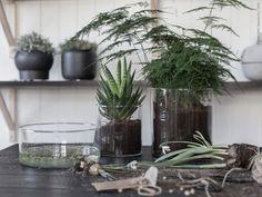 Vi planterar gröna växter i glasvaser där planteringsjorden får bli synlig. CYLINDER vas/skål set om 3, klarglas.