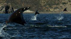 Un evento inexplicable de la naturaleza fue grabado en video ¡No te lo puedes perder!