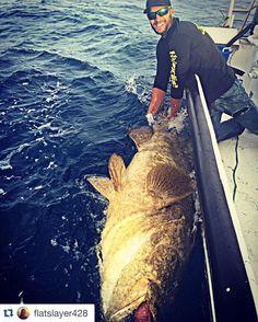 @flatslayer428 with a monster Goliath grouper!  #prostaff #halocline2016 #halocline_fishing #fish #fishing #fishlife #fishingtrip #grouper #grouperfishing #goliath #goliathgrouper #bottomfishing #killedit #instacool #instalike #instadaily #instafollow #offshore #offshorelife #offshorefishing #picoftheday #bottom #amazing by halocline_fishing