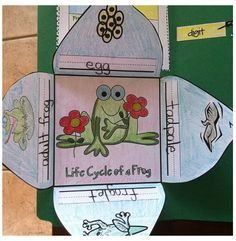 frog life cycle foldable