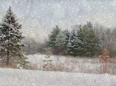 Snow Scene by Cher12861, via Flickr