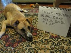 22 Best Pet Shaming Pictures | Animal Mozo
