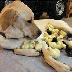 #cute #dogs