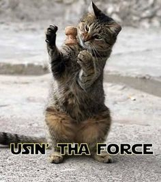 This cat will be a Jedi one day