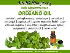 Oregano Oil for Weight Loss & Inflammation - A new animal study shows that carvacrol, the active component of Wild Mediterranean Oregano Oil, can actually prevent diet-induced obesity by modulating genes as well as reducing inflammation in white adipose tissue.