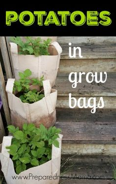 My solution to rocky ground - potatoes in grow bags | PreparednessMama