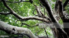 View Stock Photo of Low Angle View Of Tree Growing In Forest. Find premium, high-resolution photos at Getty Images. Yamagata, Nature Collection, Low Angle, Growing Tree, High Resolution Photos, Hong Kong, Stock Photos, Leica, Resolutions