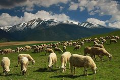 Slovak Folk Traditions Tour - Amazing 5 days in Slovakia Native Country, The Good Shepherd, Like A Local, Central Europe, Bratislava, Animals Of The World, Far Away, Tour Guide, Farm Life