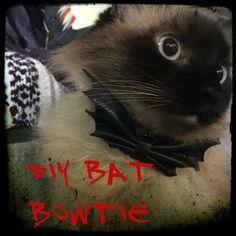 Picture of DIY Bat Bowtie