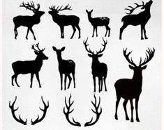 A set of 8 deers and 2 antlers specially made for Christmas time! The set is useful for those who use Illustrator as well and for those who use Photoshop, because it contains both vectors and PS brushes. Dont miss the other 2 deer sets: Hirsch Silhouette, Deer Head Silhouette, Silhouette Portrait, Silhouette Cameo, Creation Art, Reindeer Antlers, Clip Art, Photoshop, Silhouette Projects