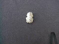 Silk Cotton Tree – Caribbean Archaeology Program Historical Artifacts, Archaeology, Caribbean, Stud Earrings, Silk, Cotton, Stud Earring, Earring Studs, Silk Sarees