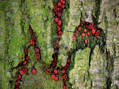 beetles Shield Bugs, Wind Break, Bugs And Insects, Food Coloring, Fascinator, Fairy Tales, Beetles, Snails, Flowers