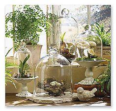 cloche terrarium. beautiful arrangement.