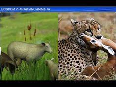 CBSE Class 11 Biology, Biological Classification – 5, kingdom Plantae an...