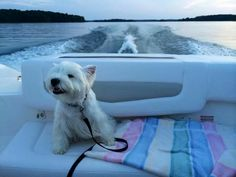 Emmie got her Boat ride in Weeeee......   from a FB account