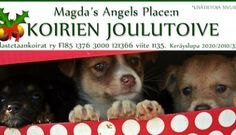 Magda´s Angels Placen koirien joulutoive - Magda's Angels Place dogs Christmas wish - Pelastetaan Koirat ry Pet Organization, Volunteer Work, Christmas Wishes, How To Raise Money, Abandoned, Something To Do, Dogs, Angels, Left Out