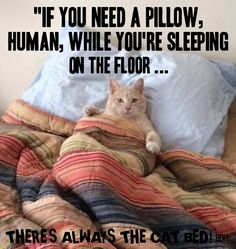 A collection of cute and funny cat photos and videos! Funny Animal Memes, Cat Memes, Funny Cats, Funny Animals, Cute Animals, Gatos Cool, Animal Reiki, Funny Cat Photos, Orange Cats