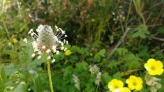 Plants, Photography, Flora, Plant, Photograph, Fotografie, Planting, Fotografia, Photoshoot