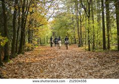 Horses In Forest Stock Photos, Images, & Pictures | Shutterstock