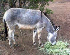 Arizona's wild burros are under the threat of being displaced due to their growing population. Creating a national range for the burro will help them to stay where they are. Sign this petition to help these animals remain in the place they call home.