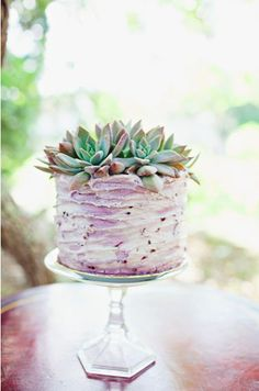 succulent cake, incredibly gorgeous.