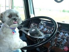Pet Friendly Travel discussed in our latest blog.  #bctrks