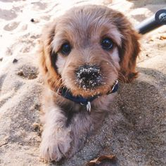 Cachorro en la arena