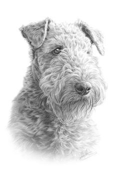 Airedale Terrier by nolonstacey, via Flickr