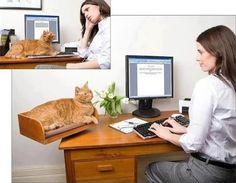 #cat #desk