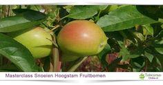 Hoogstam fruitbomen verdwijnen steeds meer uit ons landschap en zijn het waard om te behouden. De kennis van het onderhouden en snoeien van hoogstam fruitbomen is helaas moeilijk te vinden, daarom hebben wij deze praktische cursus opgezet om kleine hoogstam boomgaarden en solitaire fruitbomen bij boerderijen in ere te herstellen en te behouden. We behandelen:   Snoeiwijze van verschillende fruitrassen in hoofdzaak appel, peer en pruimen  Snoeimethode met als doel het behoud van de boomvorm…