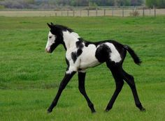 Neat looking foal!