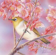 Silvereye Heidi Willis: Silvereye. Watercolour 12x12cm / 4.7×4.7inch