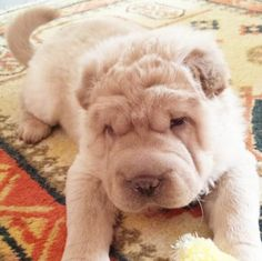 5) They can easily be mistaken for a fluffy rug. ;)