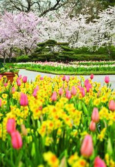 A color explosion at Dallas Blooms - Spring 2014