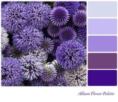 Google Image Result for http://www.deniseinbloom.com/wp-content/uploads/2012/08/bigstock-Allium-flower-background-colou-371057892-590x511.jpg