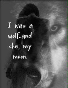 I will always see her as my moon, even though she may never see me as her wolf a. - I will always see her as my moon, even though she may never see me as her wolf again as long as she - Wolf Spirit, Spirit Animal, Lone Wolf Quotes, Wolf Qoutes, Wolf Love, Warrior Quotes, Big Bad Wolf, Relationship Quotes, Relationships