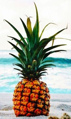beach.quenalbertini: Large pineapple in the beach, coquita