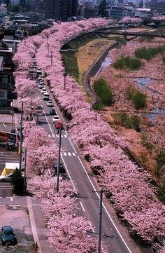 Yamagata JAPAN