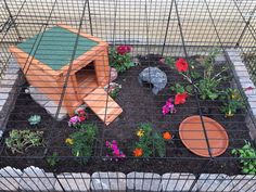 Use a dog crate to enclose your tortoise's habitat! Get a dog crate that is the ideal size for your tortoise. Tortoise As Pets, Tortoise House, Tortoise Habitat, Tortoise Table, Baby Tortoise, Sulcata Tortoise, Gecko Habitat, Turtle Care, Vivarium