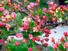 Spring blossoms by j.africk