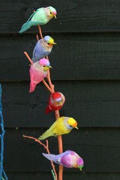 Rainbow Colored Birds