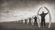 He depicts them in possession of tusks taken from elephants slaughtered by poachers in Amboseli and Tsavo national parks in Kenya. Picture:...