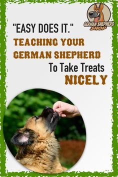 Training Your German Shepherd Dog - Champion Dogs German Shepherd Information, German Shepherd Facts, German Shepherd Training, German Shepherd Puppies, German Shepherds, Dog Training Come, Dog Training Tips, Training Quotes, Yorkshire Terrier Puppies