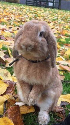 /r/rabbits is an open community where users can learn, share cute pictures, or ask questions about rabbits. Please note we are a *pet rabbit*. Cute Wild Animals, Super Cute Animals, Cute Little Animals, Cute Funny Animals, Animals And Pets, Cute Dogs, Cute Bunny Pictures, Cute Animal Pictures, Cute Baby Bunnies