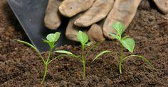 Il existe des engrais naturels, efficaces et totalement gratuits, qui feront du bien à la planète et à votre porte-monnaie !