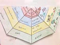 Food Web Energy Pyramid Template | animal adaptations | Pinterest ...